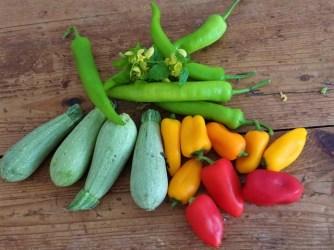 Gebratenes Gemüse mit gebackenem Feta und Kartöffeltaler (11)