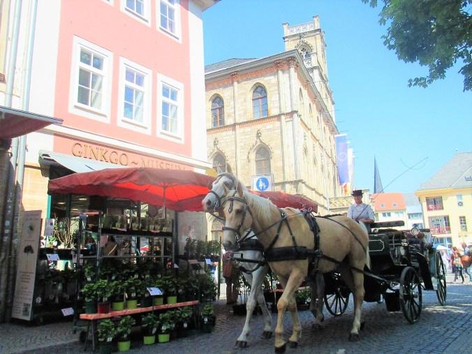 Weimarer Blumenmarkt 19.05 (6)
