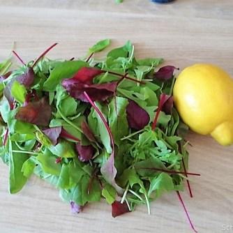 Mairübchen,geräuchertes Forellenfilet, Salat (7)
