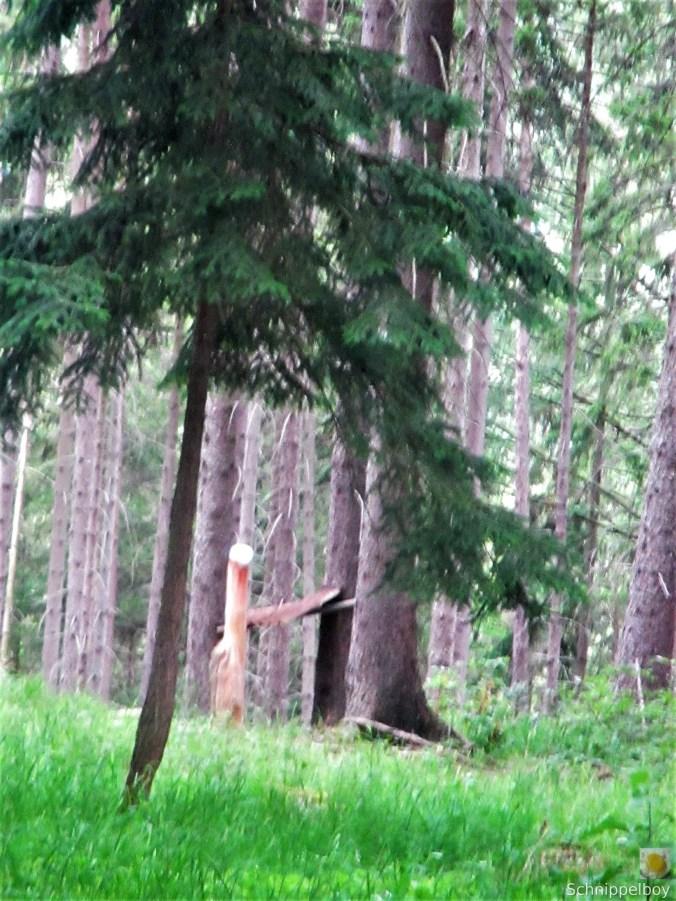 Wald bei Buchfahrt (18)