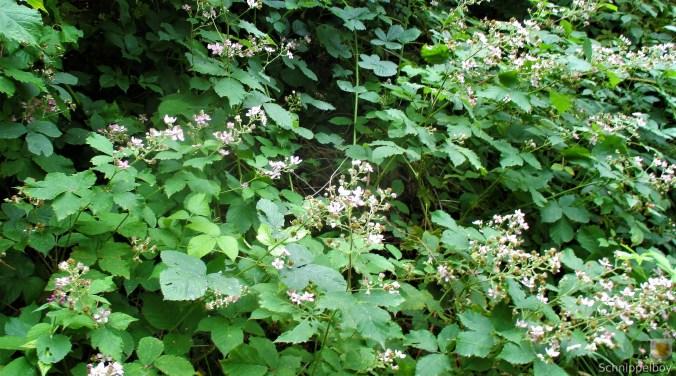 Blumen,Früchte,Insekten im Wald (5)