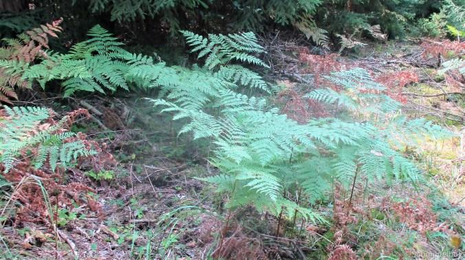 Im Wald -August 2019 (12)