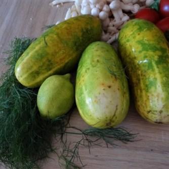 Schmorgurke, Tomatenragout, Meeresfrüchte (8)