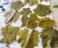 Gefüllte Weinblätter, Bohnensalat, Humus,. (14)