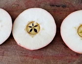 Sellerie,Kartoffelstampf und Apelmus (22)
