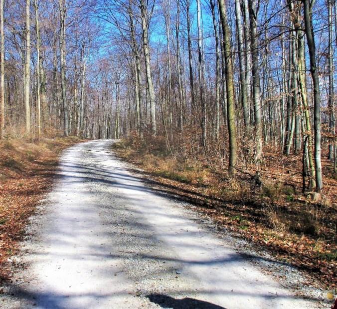 19.03.20 Wald Blankenhain. 1 (1)