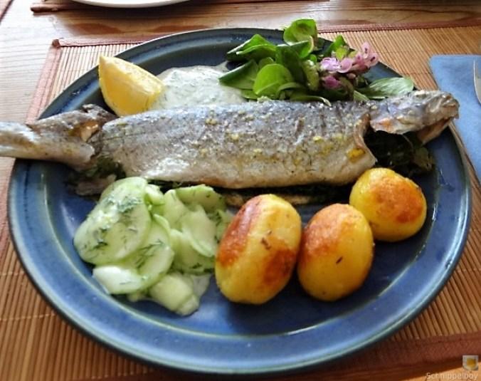 Forelle, Salate und Dip (23)
