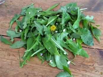 Amaranth, Wildkräutersalat und Tomaten (14)