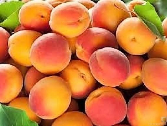 Aprikosenkuchen (5)