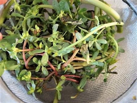 Gemüse-Portulakpfanne mit Joghurtdip (8)