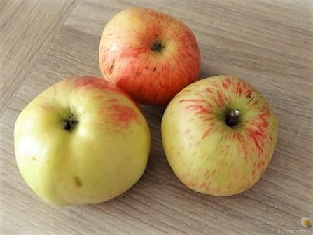 Kaffeezeit mit Apfelkuchen (3)