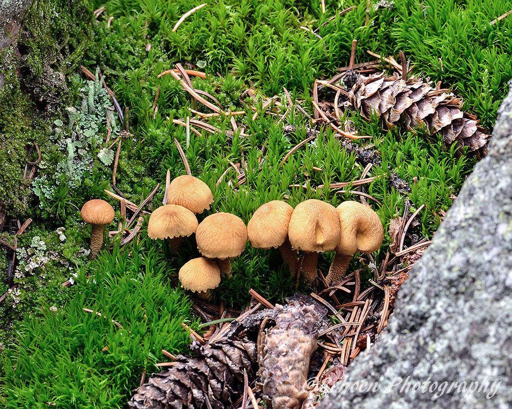 Mushroom 017