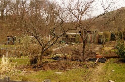 Die Pfirsichbäume im März 2017