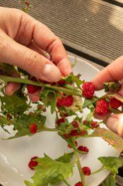 ...Erdbeerspinat. Einfach abstreifen...