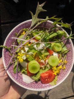 und frisch in einen bunten Salat.