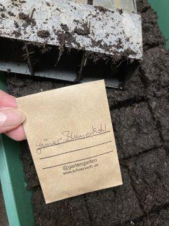 Auch die eigenen Samen vom Grünen Blumenkohl werden ausgesät.