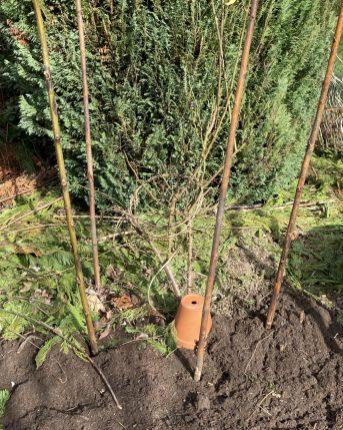 Zuerst Reih um dickere Zweige in den Boden stecken.