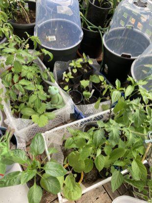 Pflanzen Stau auf dem Balkon