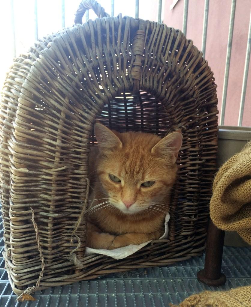 Katze im Katzenkorb