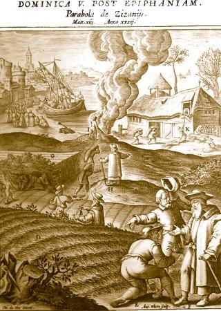Vème dimanche après l'Epiphanie : le bon grain & l'ivraie