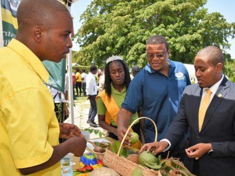 Tertiary Education Funding