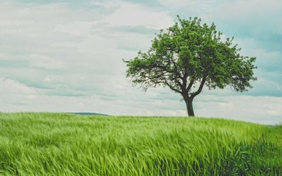 Upward and Outward: The Tree of Wisdom and Its Prudential Fruit