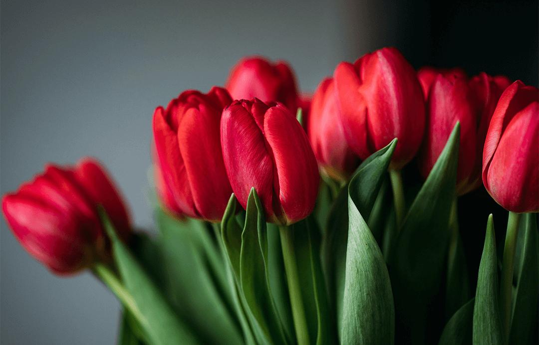 neue-kinofilme-und-serien-im-april-2019-schonhalbelf-blog-netflix