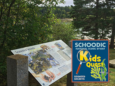 Kid's Quest: Seaweed Secrets
