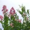 ピンク色オーラから成長する起動力は、情熱