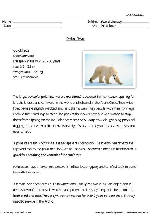 Polar Bear Worksheets #2
