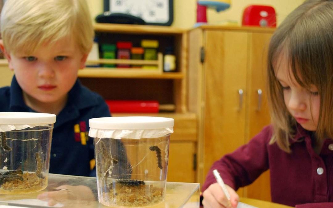 PreK students observe caterpillars.