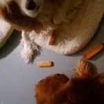 Two dogs, three chews...