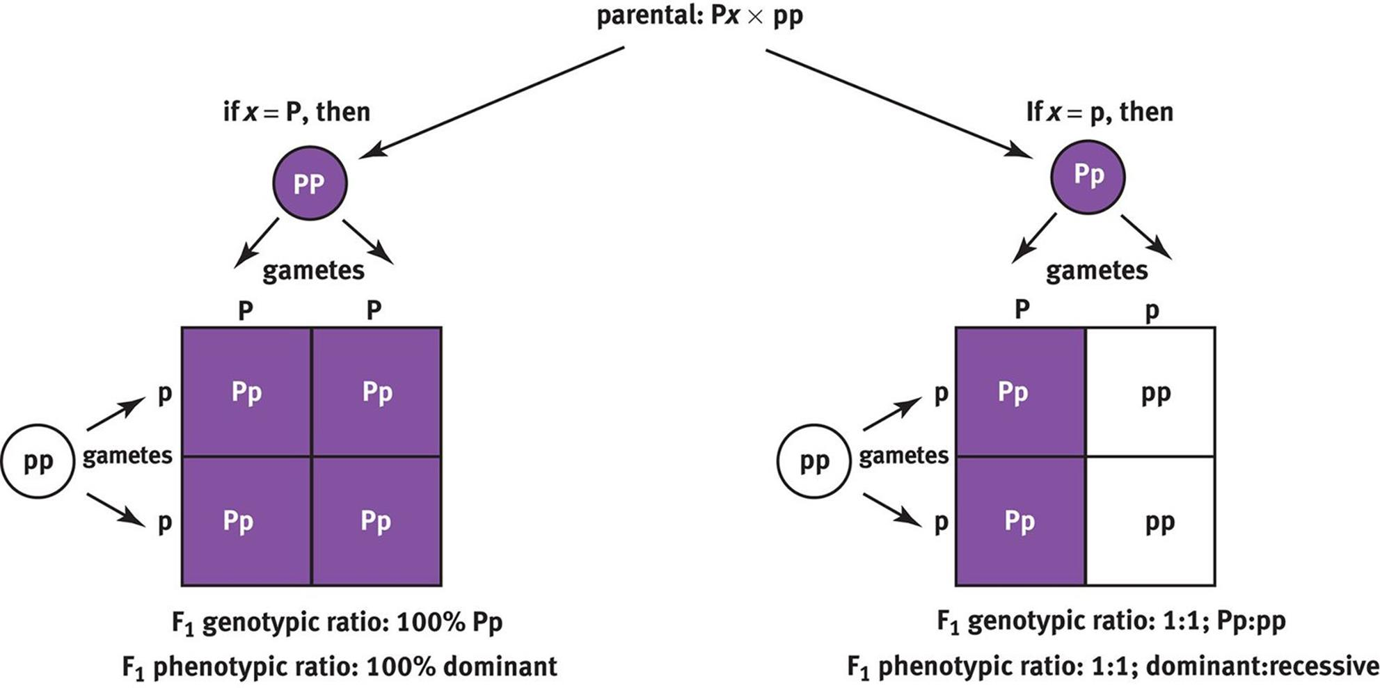 Ytical Approaches In Genetics