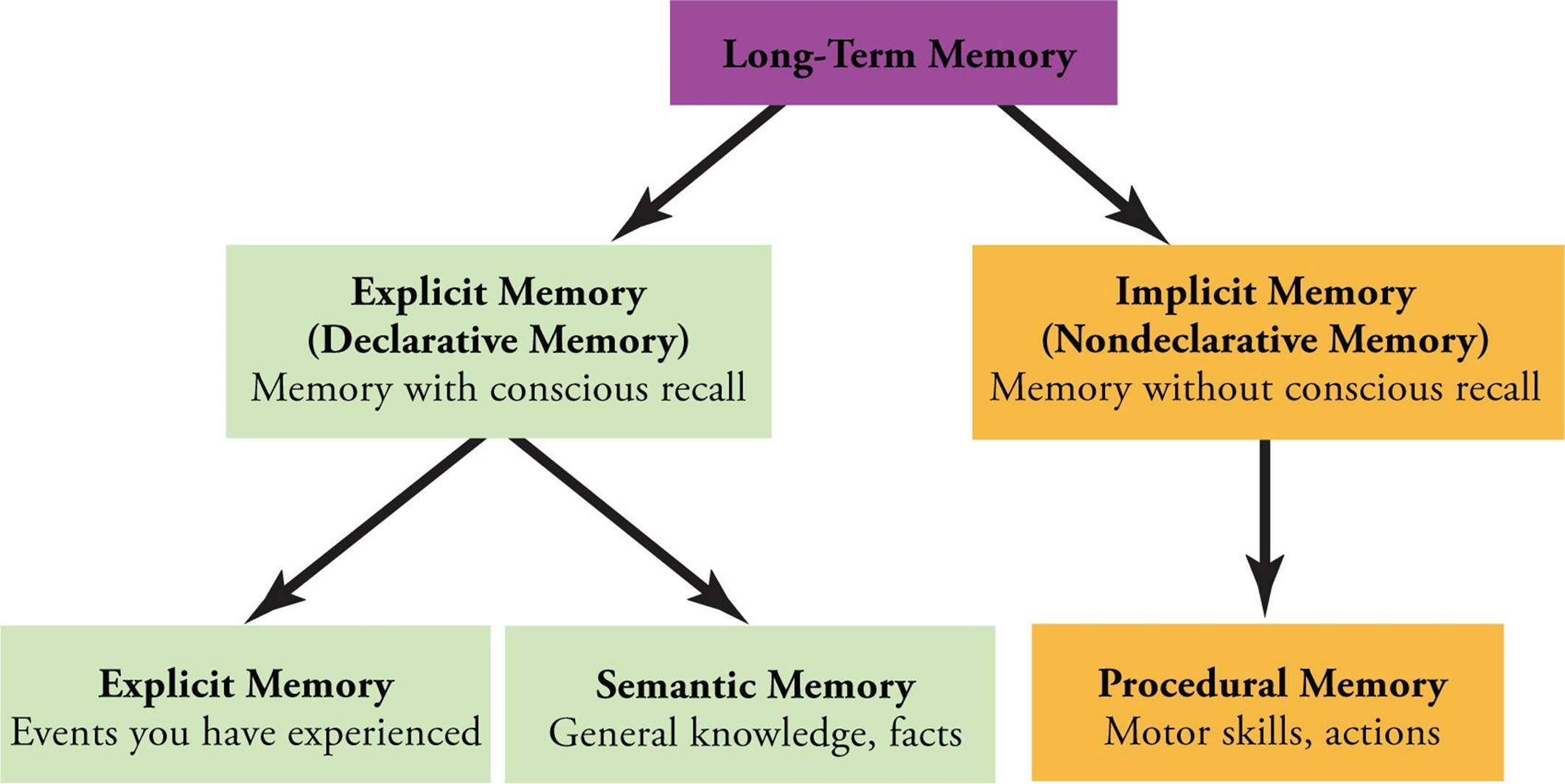 Learning Memory And Behavior