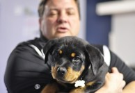 Burkey holds Clutch, a rottweiler puppy trained at MDT. PHOTO BY NATHAN GARTNER|PHOTO EDITOR