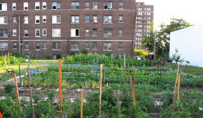 urbanfarming_occupy_picture