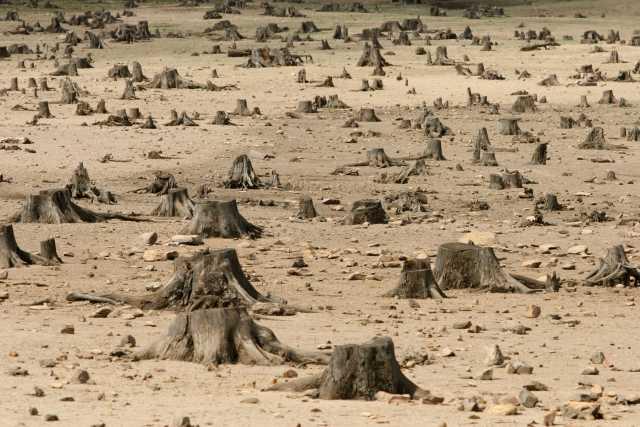Sad image showing the increase in deforestation