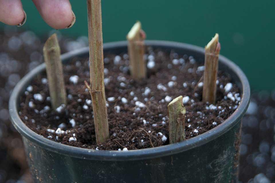 Tall Plant Pots