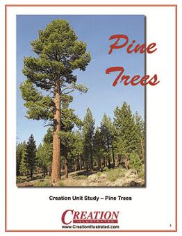 Creation Illustrated Unit Study Pine Trees