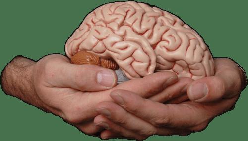 BrainInHandsColourTranspare