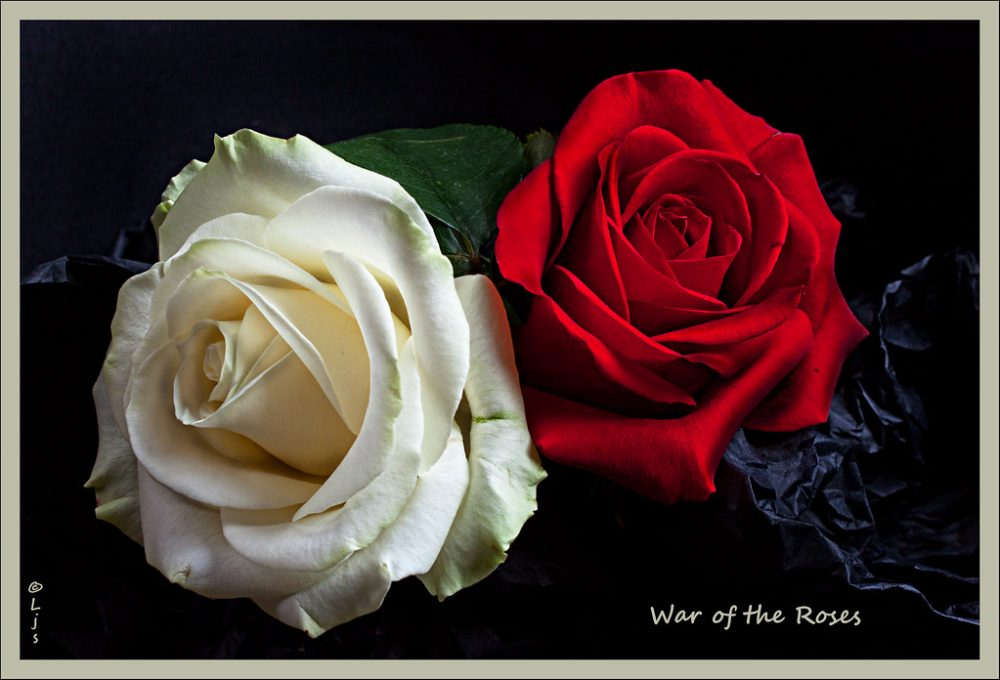 Wars of the Roses. Image by Pipilongstockings, Creative Commons 2.0 licence.