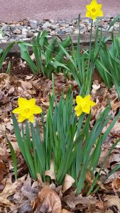 I loved that spring was beginning to flower after a long winter.