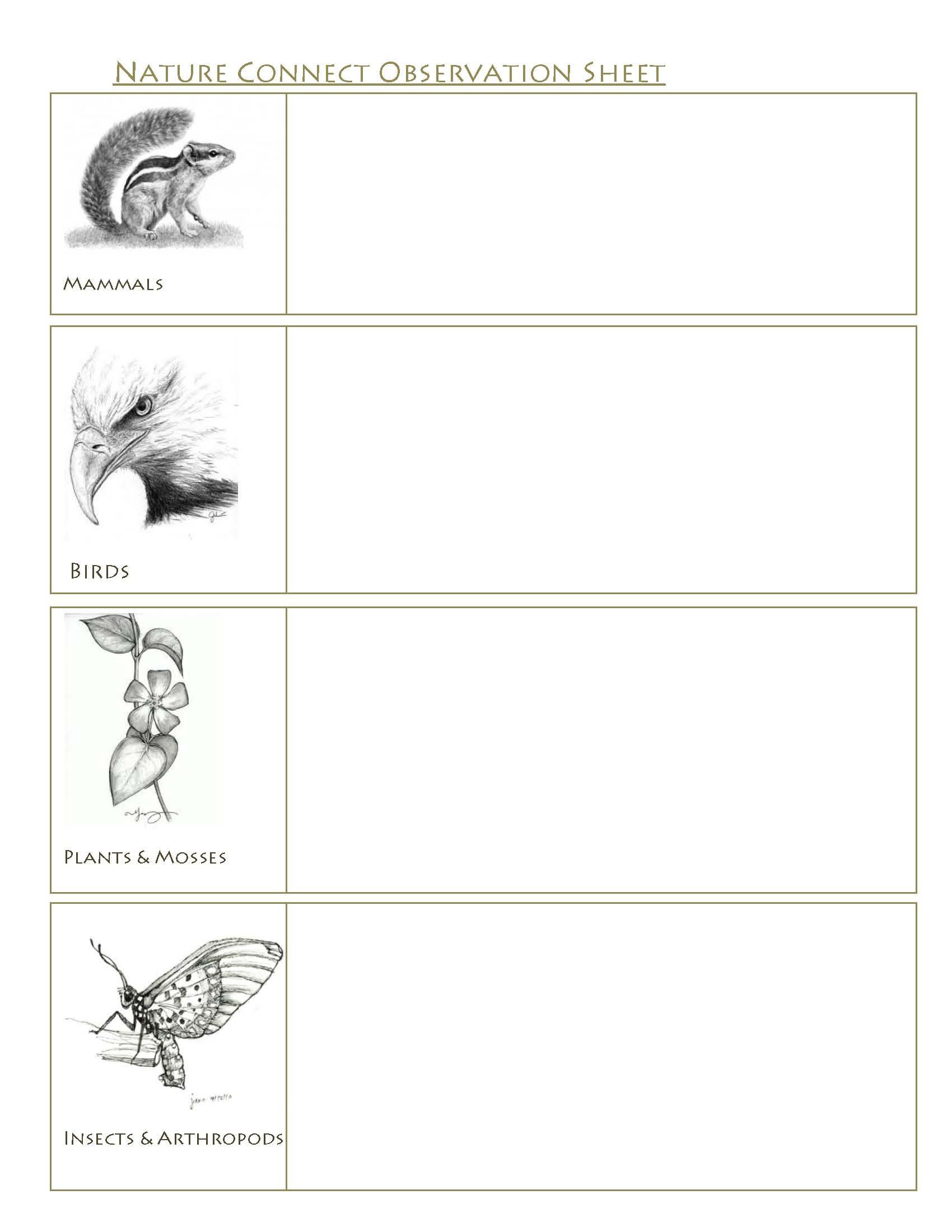 Wildlife Observation Work Sheet
