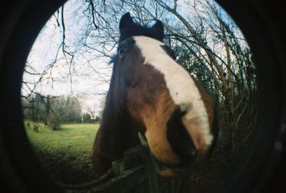 Hello horsey