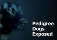 logo-pedigree-download-uk