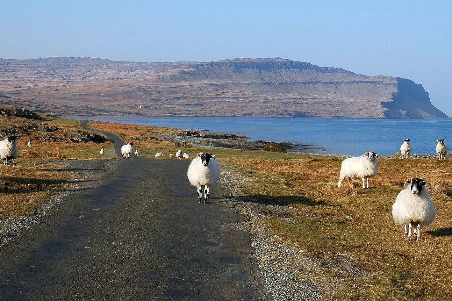 Waehrend der Whiskyreise durch Schottland unternehmen wir einen Ausflug auf die Insel Mul..