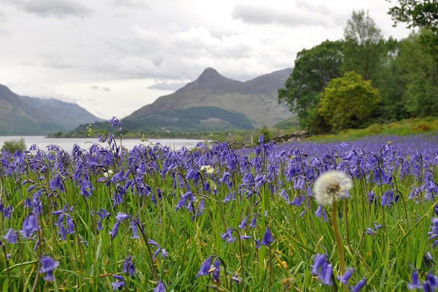 Genussreisen und Gruppenreisen werden in Schottland von Wind & Cloud Travel angeboten.