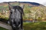 Ein Hoehepunkt der individuellen Rundreise durch Schottland ist der Cairngorm Nationalpark.