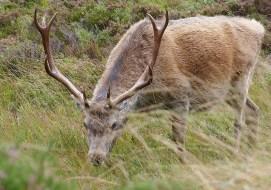Wandern auf dem Glen Affric Kintail Way in Schottland ist ein schöner Urllaub.