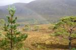 Entdecken Sie auf dieser Wanderreise das Glen Affric in all seinen Facetten.